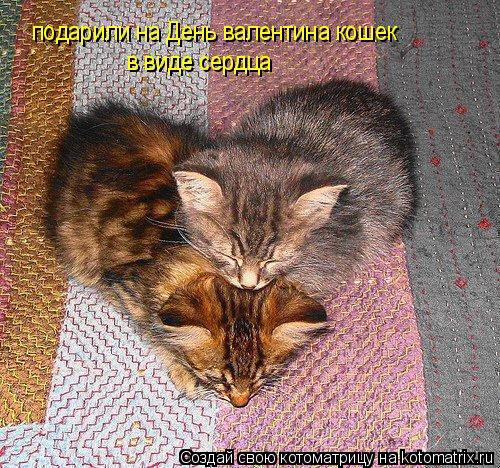 Котоматрица: подарили на День валентина кошек  в виде сердца