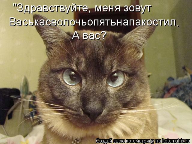 "Котоматрица: ""Здравствуйте, меня зовут Васькасволочьопятьнапакостил А вас? ."
