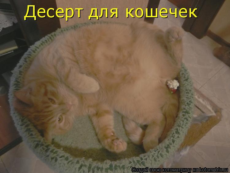 Котоматрица: Десерт для кошечек