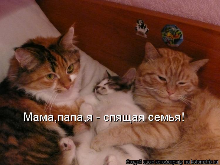 Котоматрица: Мама,папа,я - спящая семья!