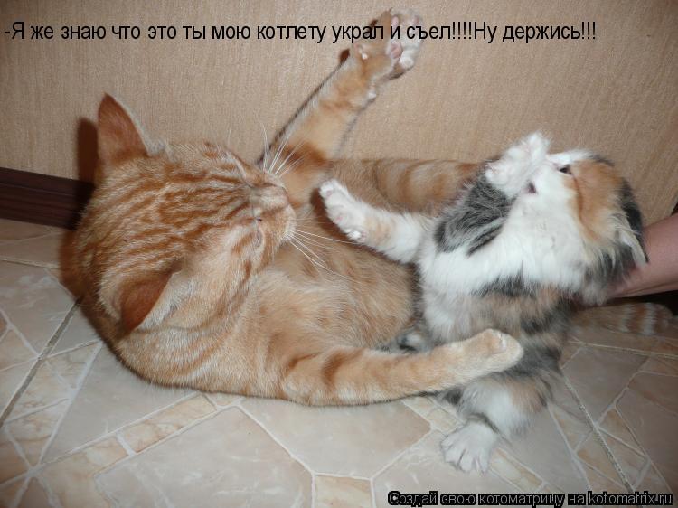Котоматрица: -Я же знаю что это ты мою котлету украл и съел!!!! -Я же знаю что это ты мою котлету украл и съел!!!!Ну держись!!!