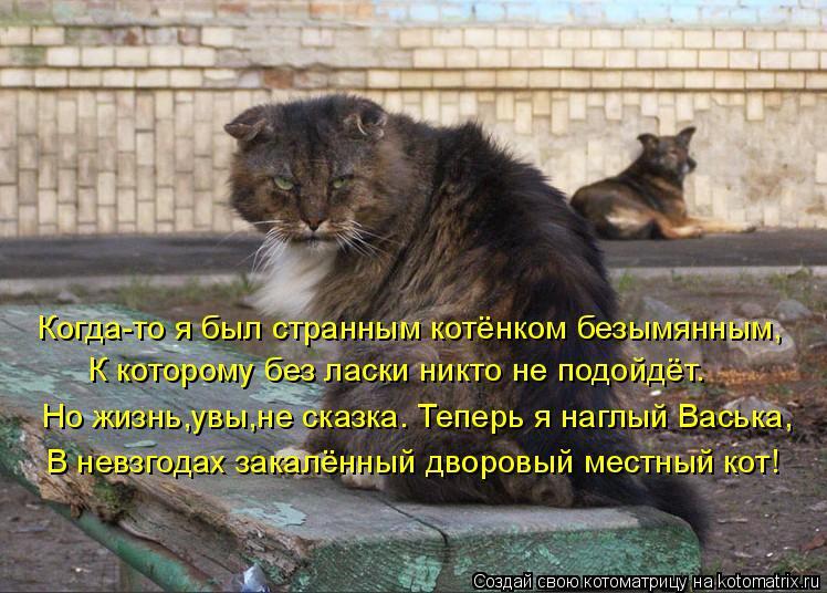 Котоматрица: Когда-то я был странным котёнком безымянным, К которому без ласки никто не подойдёт. Но жизнь,увы,не сказка. Теперь я наглый Васька, В невзго