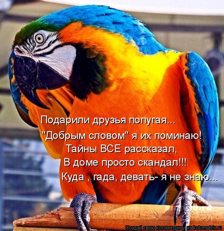 """Котоматрица: Подарили друзья попугая... """"Добрым словом"""" я их поминаю! Тайны ВСЕ рассказал, В доме просто скандал!!! Куда , гада, девать- я не знаю..."""