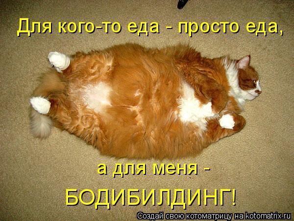 Котоматрица: Для кого-то еда - просто еда, а для меня - БОДИБИЛДИНГ!