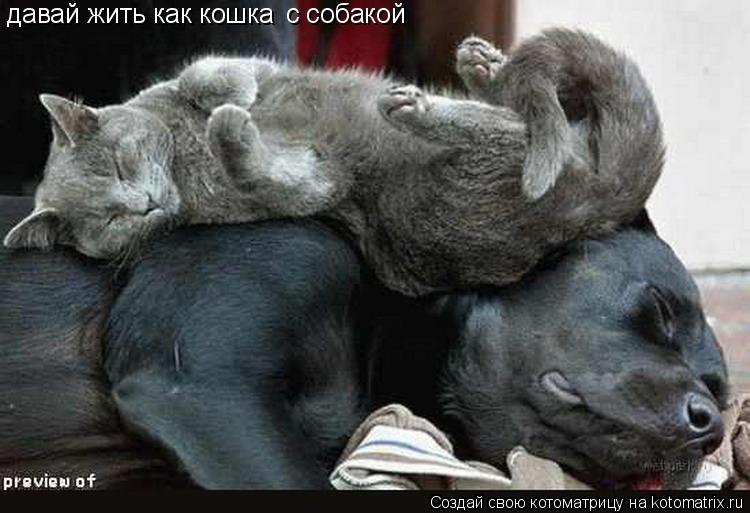 Котоматрица: давай жить как кошка с собакой