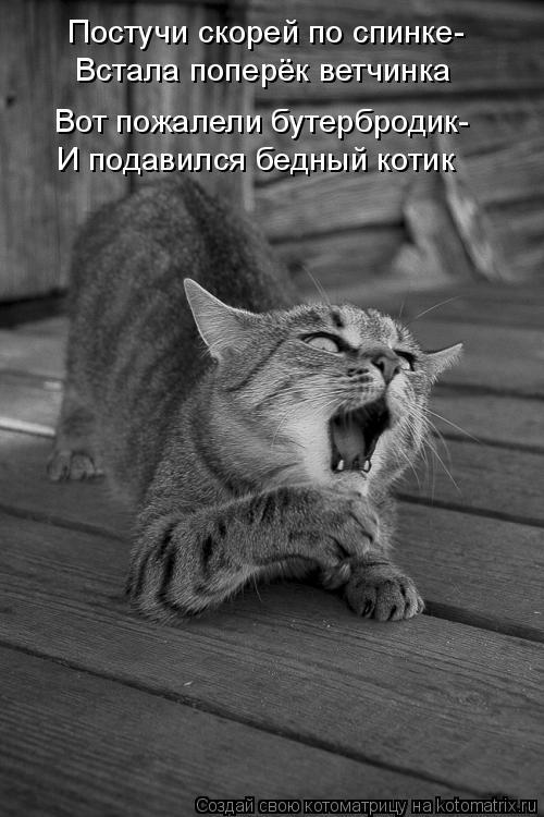 Котоматрица: Постучи скорей по спинке- Встала поперёк ветчинка Вот пожалели бутербродик- И подавился бедный котик