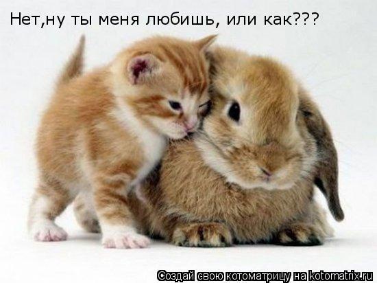 Котоматрица: Нет,ну ты меня любишь, или как???
