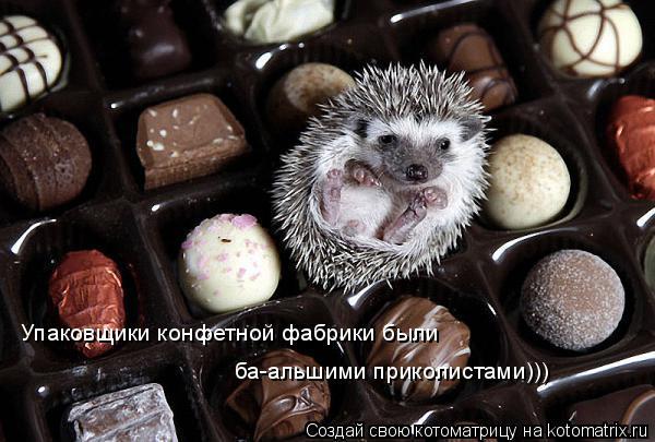 Котоматрица: Упаковщики конфетной фабрики были  ба-альшими приколистами)))