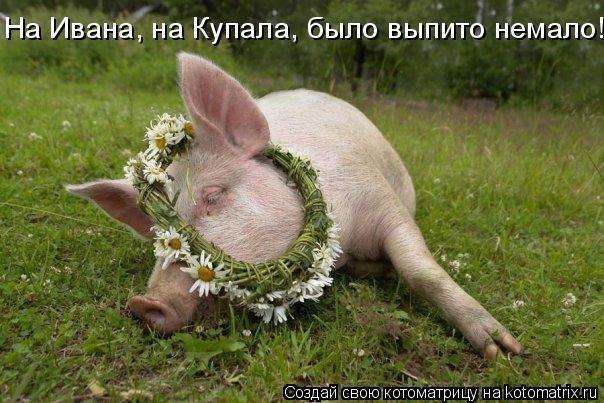 Котоматрица: На Ивана, на Купала, было выпито немало!