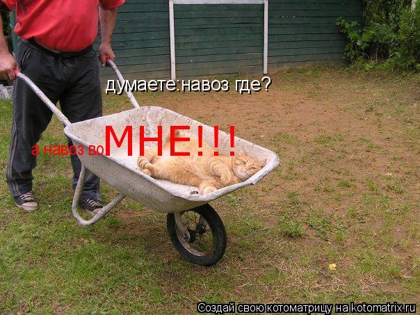 Котоматрица: думаете:навоз где? а навоз во МНЕ!!!