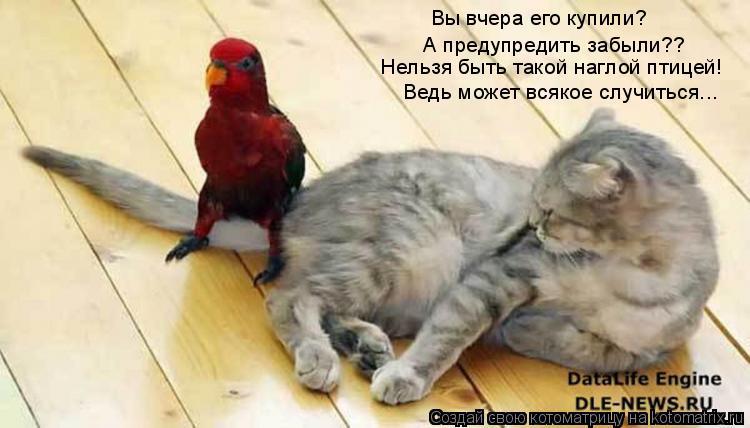 Котоматрица: Вы вчера его купили?  А предупредить забыли?? Нельзя быть такой наглой птицей! Ведь может всякое случиться...
