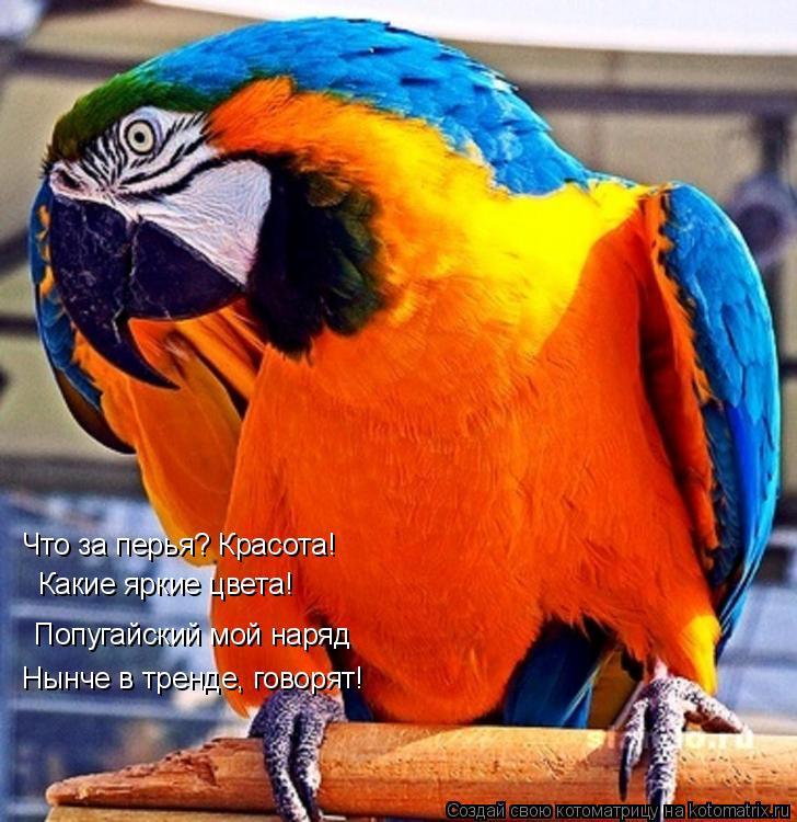 """Подарили друзья попугая...   """"Добрым словом """" я их поминаю!  Тайны ВСЕ рассказал, В доме просто скандал!"""