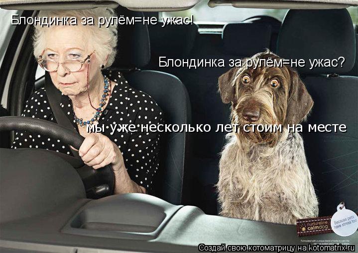 Котоматрица: Блондинка за рулём=не ужас! Блондинка за рулём=не ужас? мы уже несколько лет стоим на месте