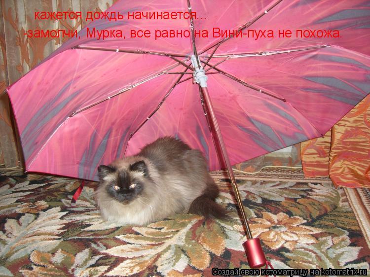 Котоматрица: кажется дождь начинается... -замолчи, Мурка, все равно на Вини-пуха не похожа.