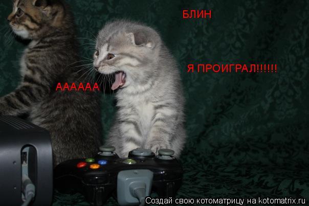 Котоматрица: АААААА БЛИН Я ПРОИГРАЛ!!!!!!