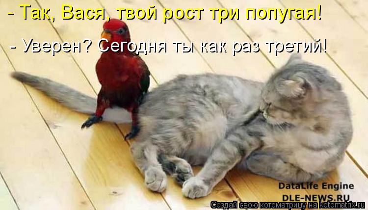Котоматрица: - Так, Вася, твой рост три попугая! - Уверен? Сегодня ты как раз третий!