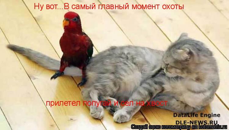 Котоматрица: Ну вот...В самый главный момент охоты прилетел попугай и сел на хвост