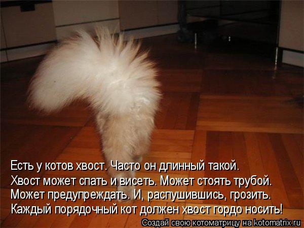 Котоматрица: Каждый порядочный кот должен хвост гордо носить! Может предупреждать. И, распушившись, грозить. Есть у котов хвост. Часто он длинный такой. Х