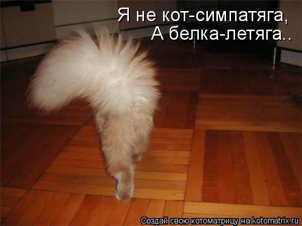 Котоматрица: Я не кот-симпатяга, А белка-летяга..