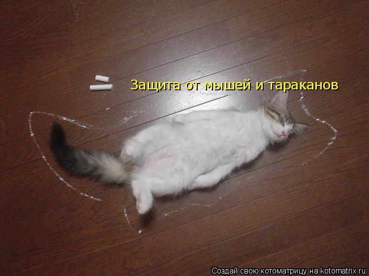 Котоматрица: Защита от мышей и тараканов