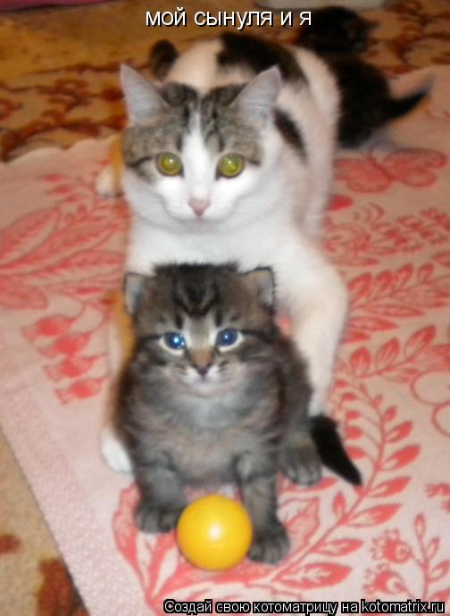 Котоматрица: мой сынуля и я