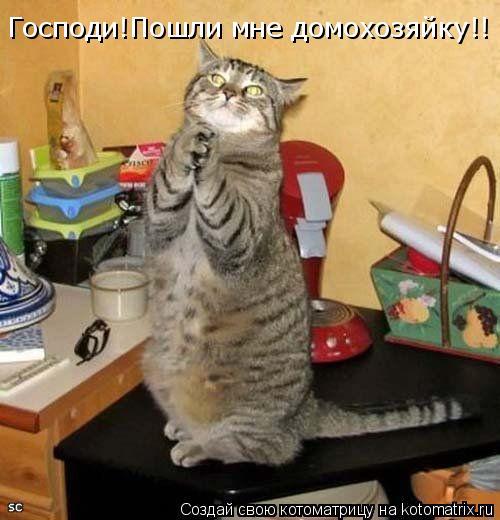 Котоматрица: Господи!Пошли мне домохозяйку!!