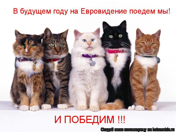 Котоматрица: В будущем году на Евровидение поедем мы! И ПОБЕДИМ !!!