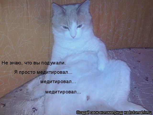 Котоматрица: Не знаю, что вы подумали. Я просто медитировал... медитировал... медитировал...