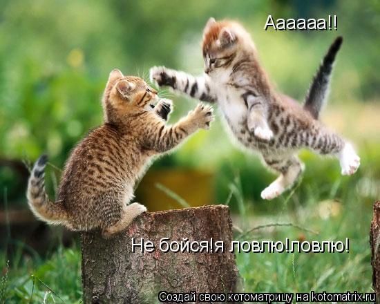 Котоматрица: Аааааа!! Не бойся!я ловлю!ловлю!