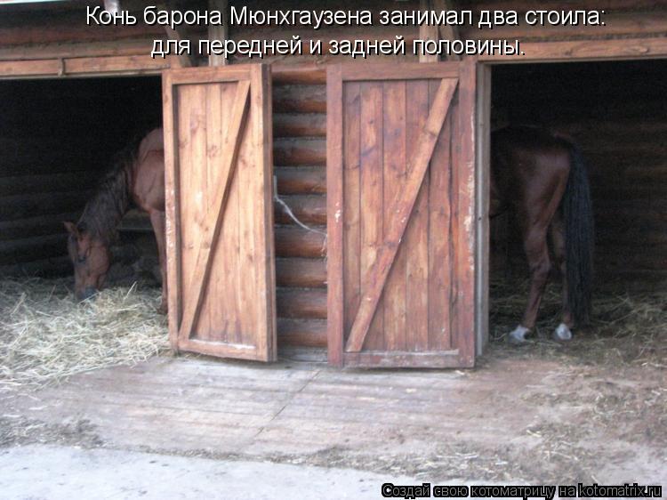 Котоматрица: Конь барона Мюнхгаузена занимал два стоила: для передней и задней половины.