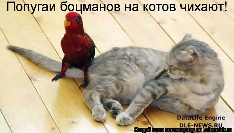 Котоматрица: Попугаи боцманов на котов чихают!