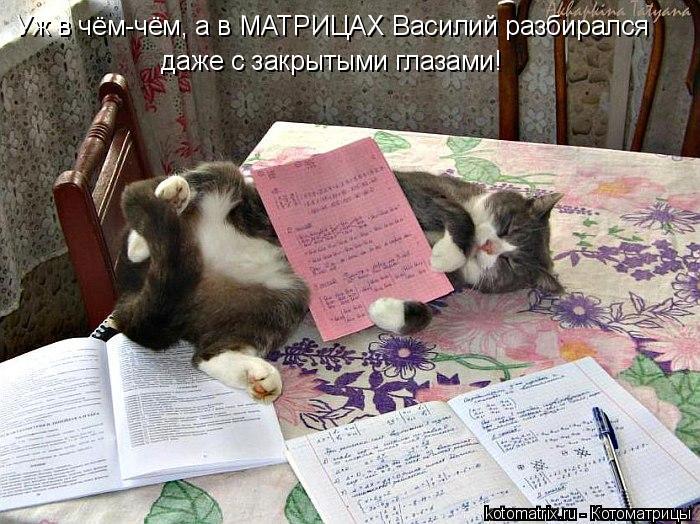Котоматрица: Уж в чём-чём, а в МАТРИЦАХ Василий разбирался даже с закрытыми глазами!