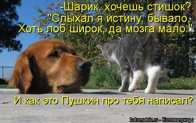 """Котоматрица: -Шарик, хочешь стишок?  """"Слыхал я истину, бывало,  Хоть лоб широк, да мозга мало."""" И как это Пушкин про тебя написал?"""