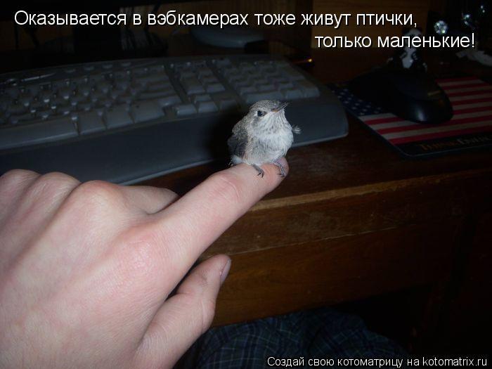 Котоматрица: Оказывается в вэбкамерах тоже живут птички,  только маленькие!