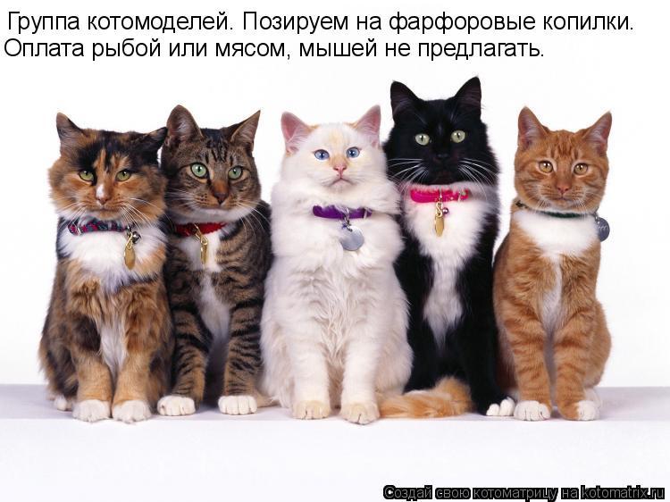 Котоматрица: Группа котомоделей. Позируем на фарфоровые копилки. Оплата рыбой или мясом, мышей не предлагать.