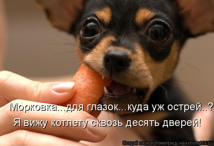 Котоматрица: Морковка...для глазок...куда уж острей..? Я вижу котлету сквозь десять дверей!
