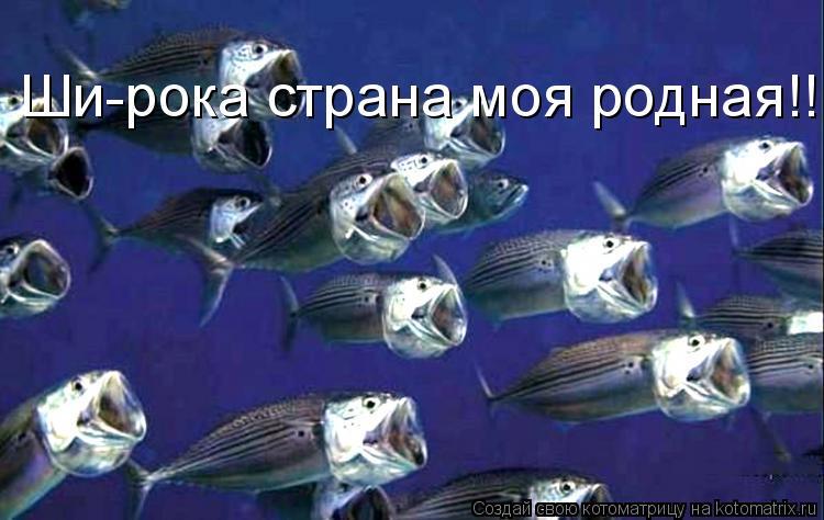 Котоматрица: Ши-рока страна моя родная!!!!