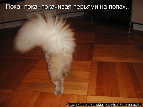 Котоматриця!)))) - Страница 6 910288