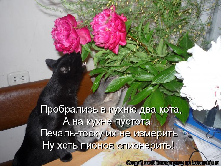 Котоматрица: Пробрались в кухню два кота, А на кухне пустота Печаль-тоску их не измерить Ну хоть пионов спионерить!