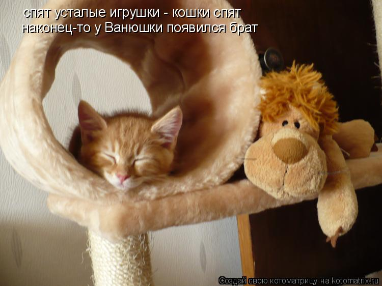 Котоматрица: спят усталые игрушки - кошки спят наконец-то у Ванюшки появился брат