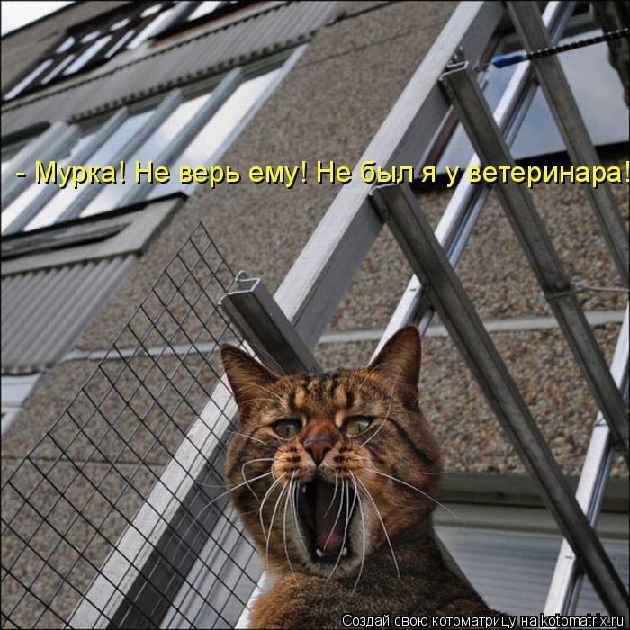 Котоматрица: - Мурка! Не верь ему! Не был я у ветеринара!