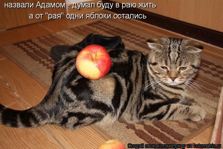 """Котоматрица: назвали Адамом - думал буду в раю жить  а от """"рая"""" одни яблоки остались"""