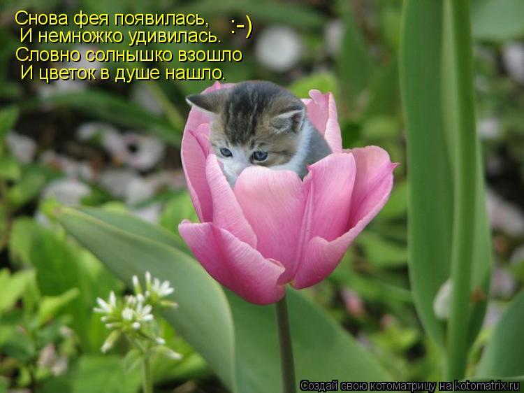 Котоматрица: Снова фея появилась,  И немножко удивилась. Словно солнышко взошло :-) И цветок в душе нашло.