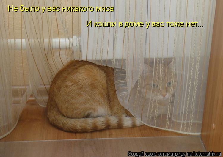 Котоматрица: Не было у вас никакого мяса И кошки в доме у вас тоже нет...