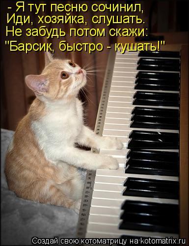 """Котоматрица: - Я тут песню сочинил, """"Барсик, быстро - кушать!"""" Иди, хозяйка, слушать. Не забудь потом скажи:"""