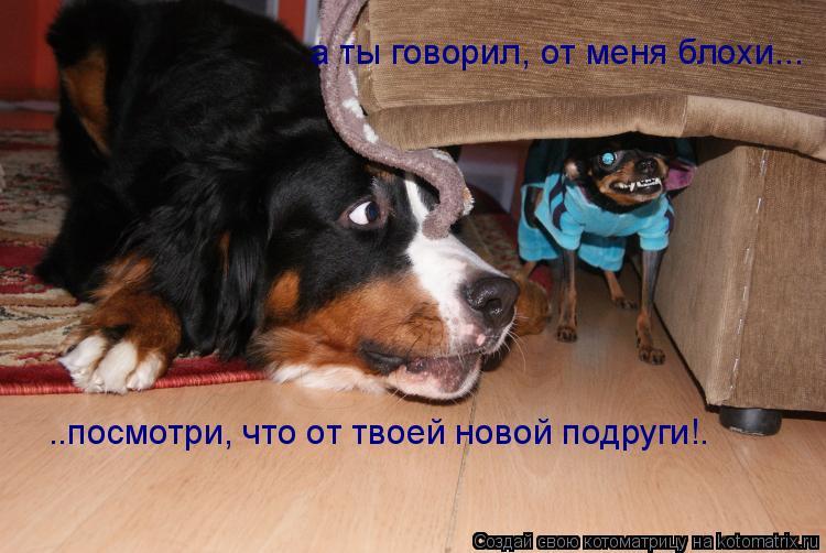 Котоматрица: а ты говорил, от меня блохи... ..посмотри, что от твоей новой подруги!.