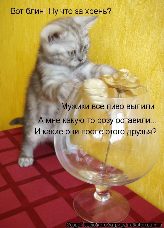 Котоматрица: Вот блин! Ну что за хрень? Мужики всё пиво выпили А мне какую-то розу оставили... И какие они после этого друзья?