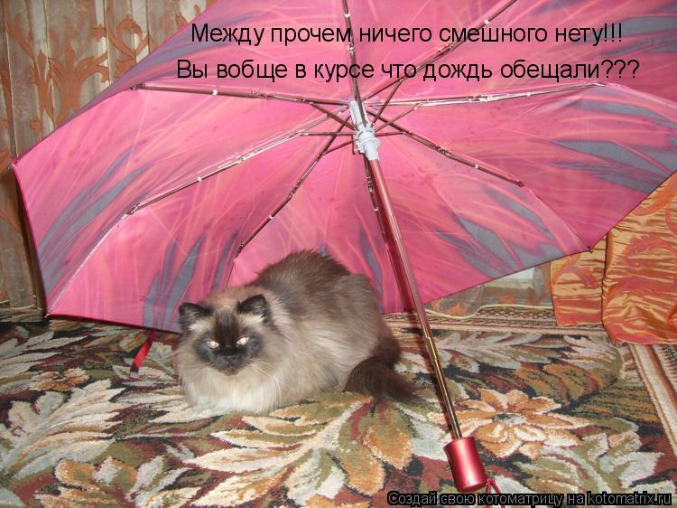 Котоматрица: Между прочем ничего смешного нету!!! Вы вобще в курсе что дождь обещали???