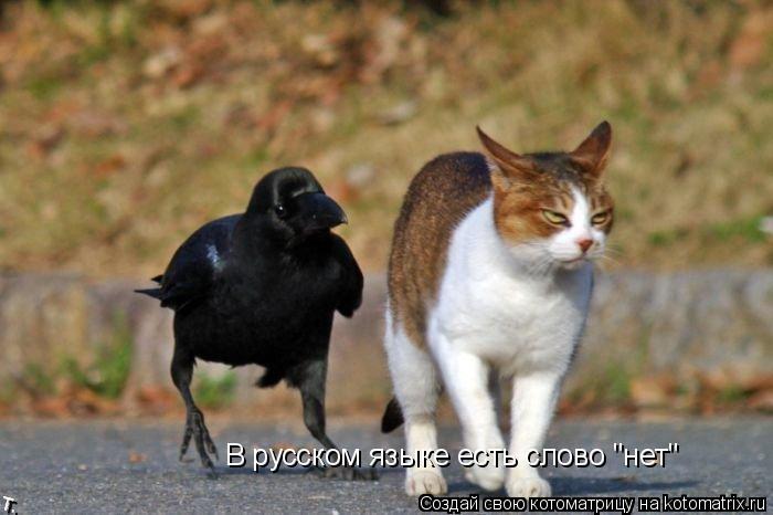"""Котоматрица: В русском языке есть слово """"нет"""""""
