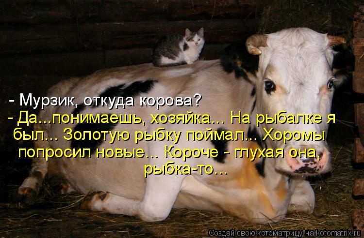 Котоматрица: - Мурзик, откуда корова? - Да...понимаешь, хозяйка... На рыбалке я был... Золотую рыбку поймал... Хоромы попросил новые... Короче - глухая она,  рыбк